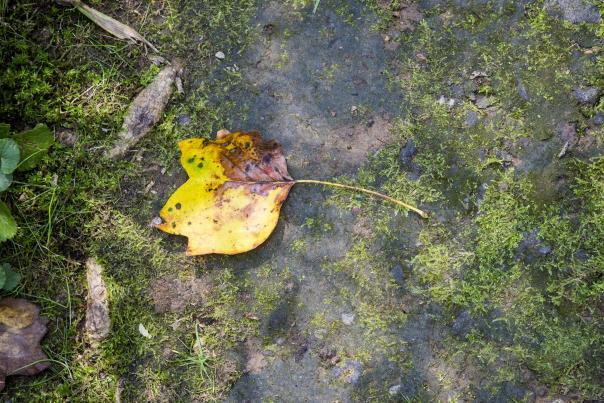 Leaf Mt. Cuba Fall