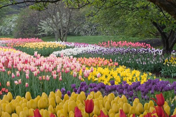Spring at Longwood Gardens