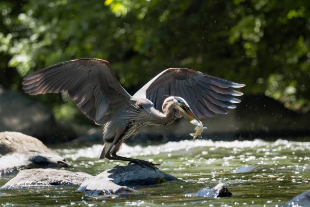 Heron Photo Contest