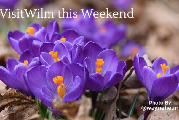 Weekend Events Blog Header