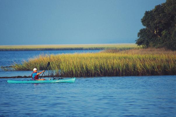 Kayaker in marsh