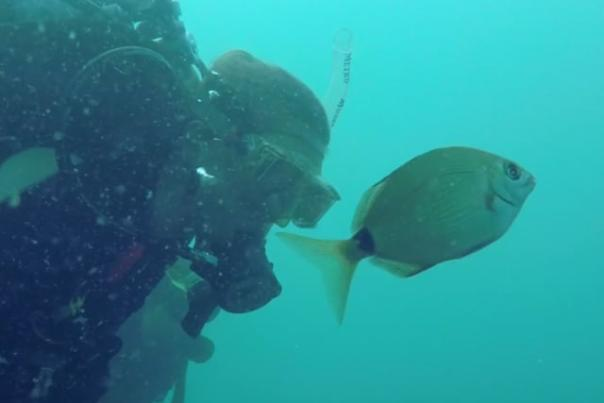 A scuba diver examining a fish in the waters of Kure Beach, NC