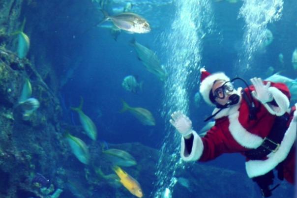 Cropped diving santa