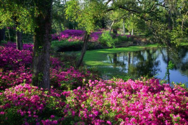 Airlie Gardens Azaleas at the Lake in Wilmington