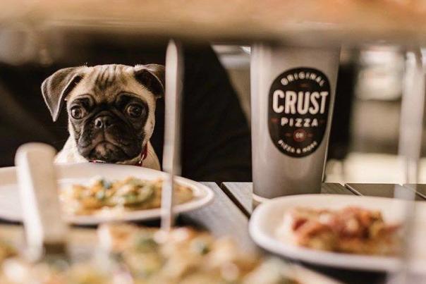itspotatothepug Instagram - Crust