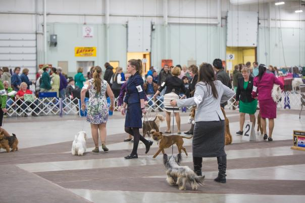 Celtic Classic Dog Show