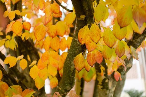 Leaves Resized