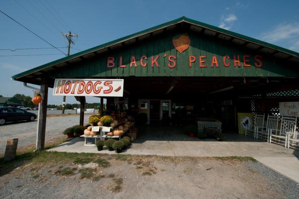 Black's Peaches