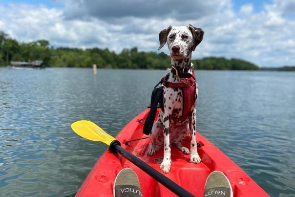 Kayak with Dalmation