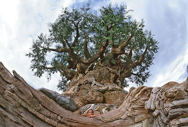 a boy at the bottom of the 50-foot-wide Tree of Life at Disney's Animal Kingdom