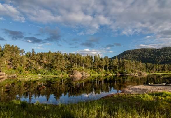 Forest landscape in Gjerstad