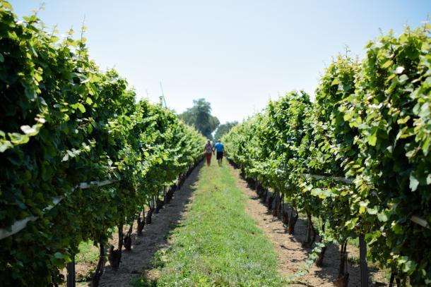 Winery walk