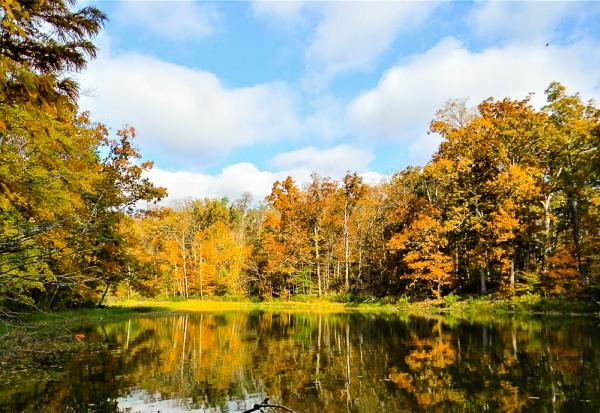 Golden fall foliage reflect off the calm waters of Deam Lake