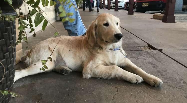Main Street Dog