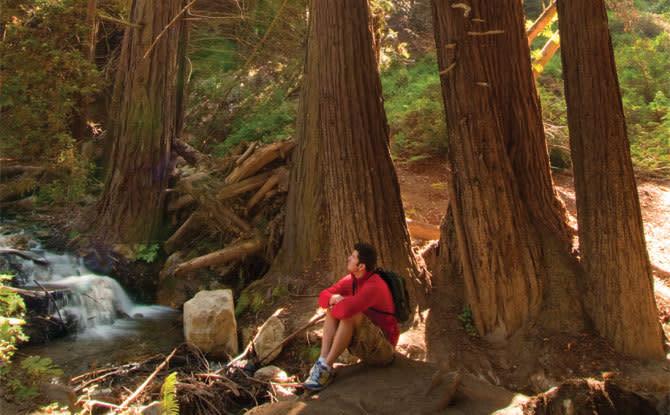 redwoods, Julia Pfeiffer Burns State Park