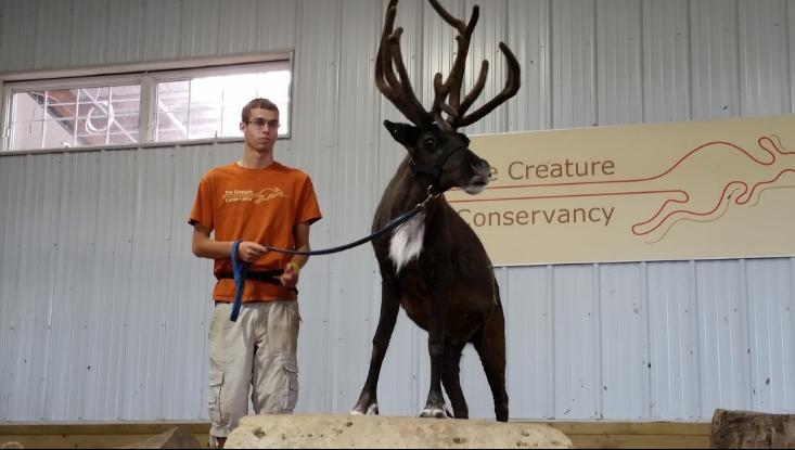 Elk at Creature Conservancy