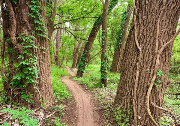 Biking trail through the woods at Brazos River Park.