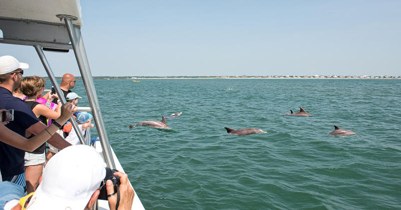People on boat watching dolphins in the water