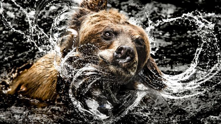 Bear Shake