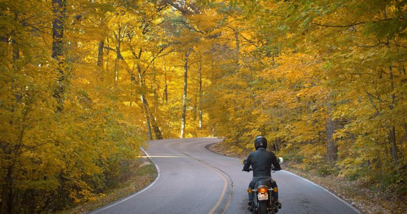 Fall Snake Road