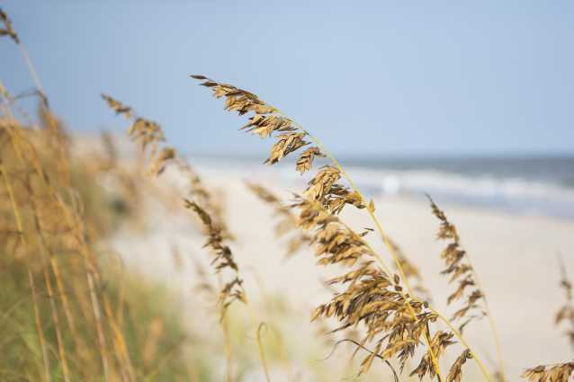 Beach and Sea Oats