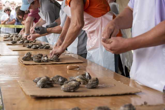 Oyster Shucking Contest at NC Oyster Festival in Shallotte, NC