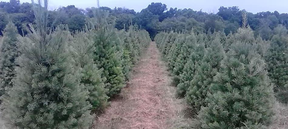 evergreenacres