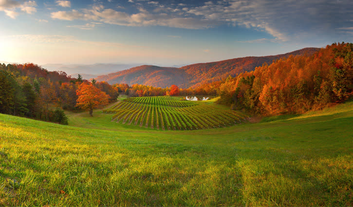Fall Color Winery