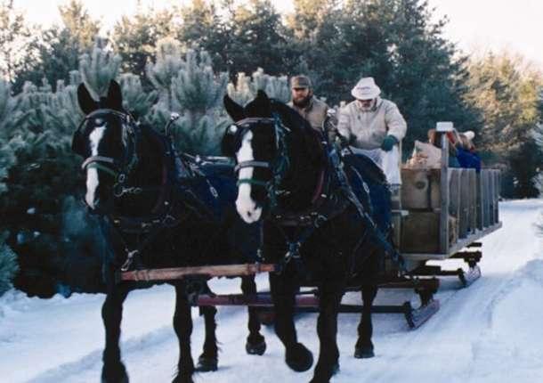 Cabin Ridge Rides