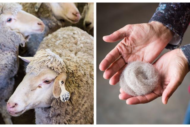 Sheep School Collage