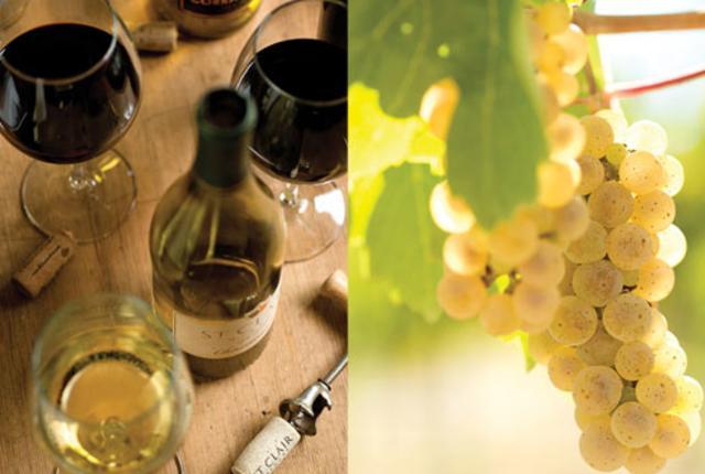 Winestill Main