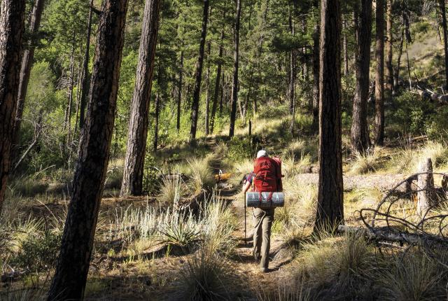 Backpacker in the Gila National Forest