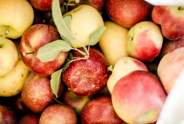 Apples, Los Luceros Historic Site