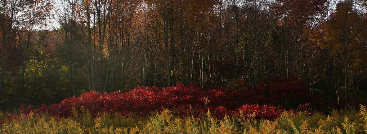 Pinhook Bog in Fall - Indiana Dunes National Park