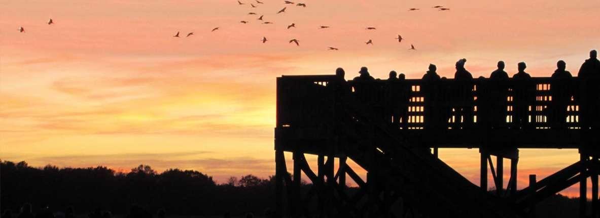 Sandhill-Cranes-Jasper-Pulaski-Northwest-Indiana-Bird-Watching