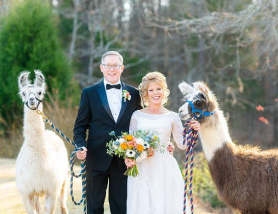 Wedding at Chapel Hill Carriage House, Couple w/ llamas