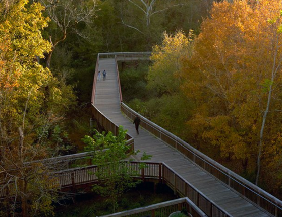 Fall Foliage at Riverwalk in Hillsborough