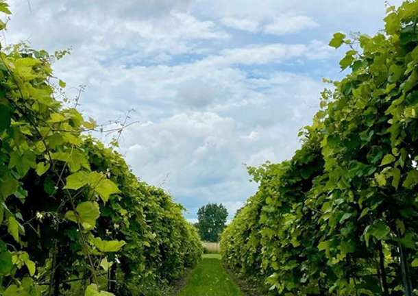 Day Dates In Overland Park at Aubrey Vineyards Winery