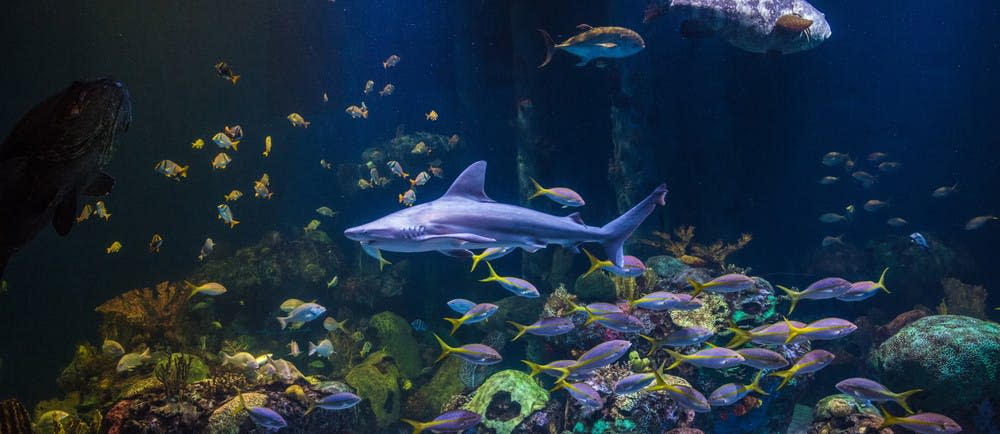 Johnny Morris' Wonders of Wildlife National Museum & Aquarium