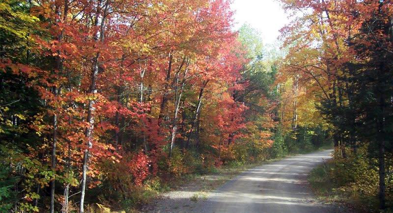 Fernberg-road in fall