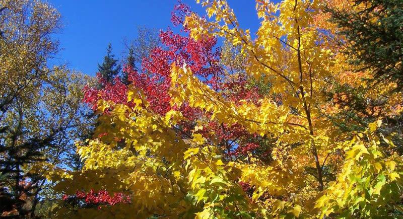 New Tomahawk Road fall colors