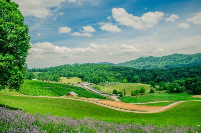 Beliveau Farm Winery Lavender Festival