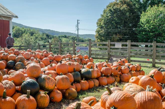 Jeter Farm - Pumpkins
