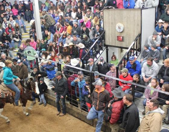 Weekly Horse Auction