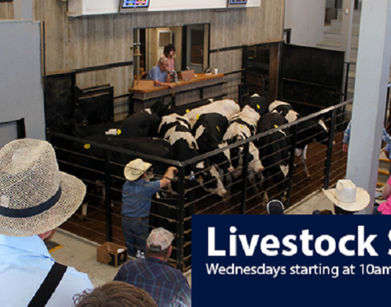Weekly Livestock Auction