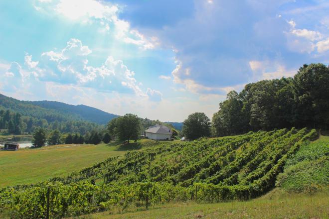 AmRhein Wine Cellars - Roanoke, Virginia Vineyard