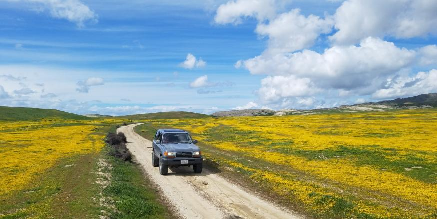 How-to: Protect and Preserve the Wildflowers this Super Bloom