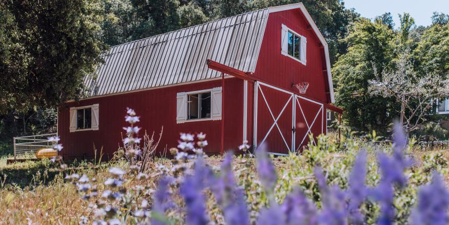 Three Ways to Experience Farm Life in SLO CAL