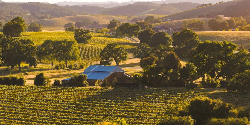 SLO CAL Wine Country is Just a Flight Away