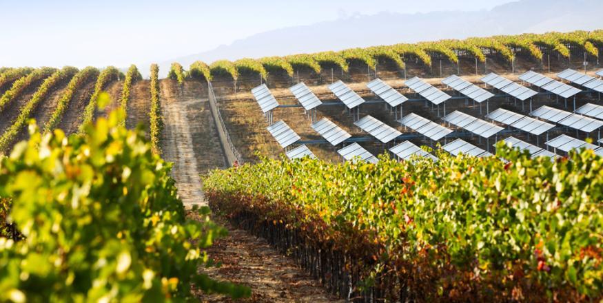 Tolosa Winery Sustainability : Photo Duane Hall